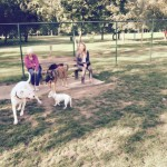 Hondenlosloopweide